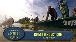 Астрахань рыбалка нижняя Волга сом жерех приманки