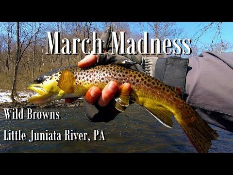 WBD - Fly Fishing Little Juniata River PA Wild Browns/Nymphing  March Madness