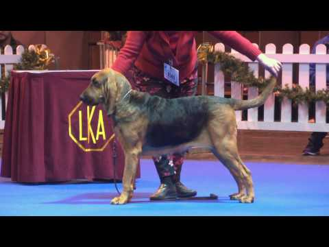 Ladies Kennel Association 2016 - Hound group FULL