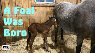 A Foal was Born!