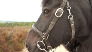 op paardenkracht Haarle-Ommen