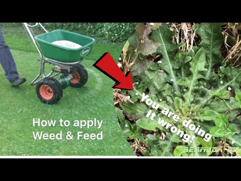 How to apply Weed and Feed