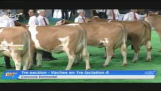 EG2017 - Simmental - Vaches en 1re lactation A