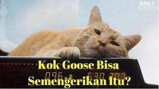 Mengenal Goose Kucing Lucu Tapi Misterius di Film Captain Marvel