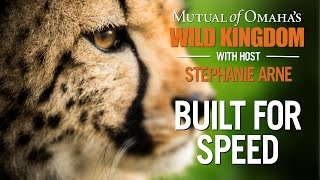Wild Kingdom - Cheetah - Built for Speed