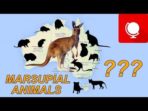 12 Most Popular Marsupial Animals in Australia