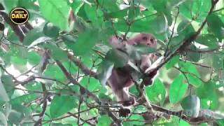 Help me Mum!! Baby Monkey Cries on the tree Angkor Daily 491