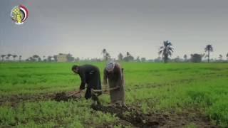 الجيش يعرض برومو فيلم ' تعمير وزراعة الصحاري' بمناسبة ثورة 30 يونيو
