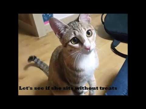 MEET EGGY - the cutest most loving cat