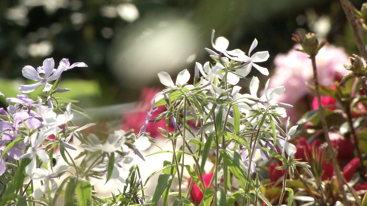 Adrians trädgård: anlägg en perennrabatt 2016 09 28