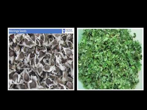 Moringa Oleifera where to buy
