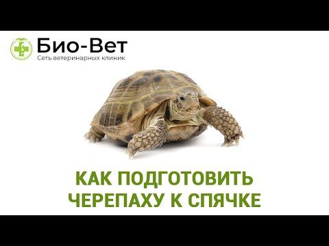 Как черепахи уходят в спячку