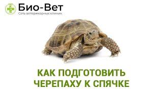 Как подготовить черепаху к спячке. Ветеринарная клиника Био-Вет.