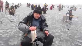 Ловля белой рыбы на гирлянду. Ловля подлещика, плотвы, густеры на мормышку(Зимняя рыбалка на гирлянду на заливе Днепра. Ловля подлещика, плотвы и густеры на ямах в толще воды на гирля..., 2015-01-23T19:40:54.000Z)