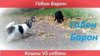 Габон Барон: кошки VS собаки. Дружба кошек и собак