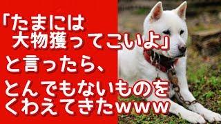 家の飼い犬(紀州犬)は狩りが得意、 「大物獲ってこい」と言うと その日...