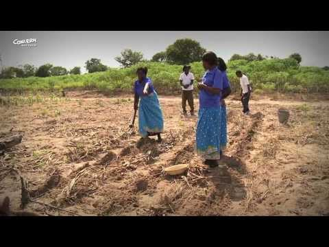 Conservation Agriculture In Malawi And Zambia