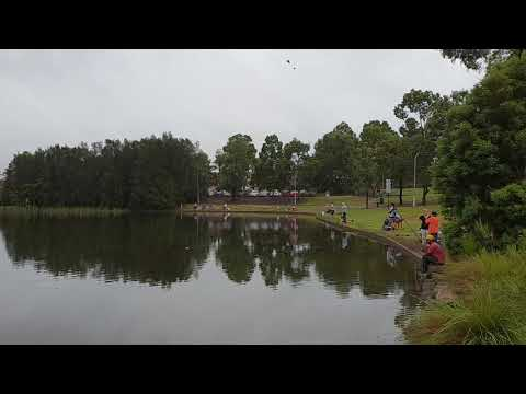 Blacktown City Council - Woodcroft Lake Carp Fishing Competition