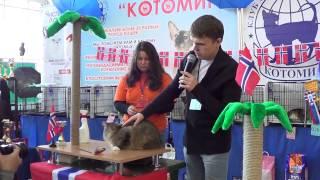 Шоу норвежских лесных кошек, 2.02.2014, Новосибирск, часть 1