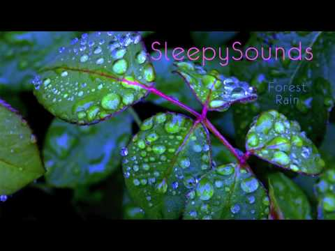 Forest Rain – 9 Hour Soundscape of Rain Falling on Leaves – sleep, ambiance, nature, ASMR