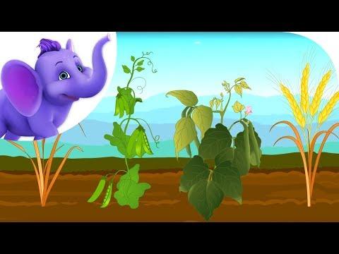 Oat, Peas, Beans and Barley - Nursery Rhyme with Karaoke