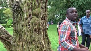 Wood Carving Tree at Aburi Botanical Gardens - Ghana May 2018 Tour