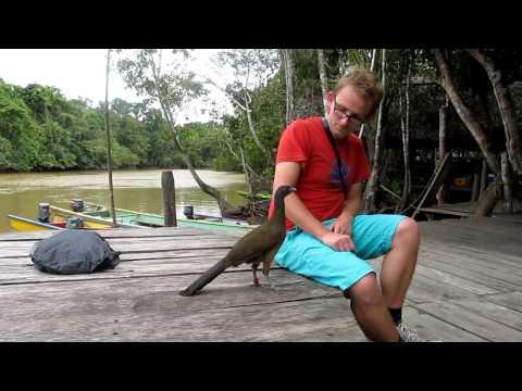 Marcel talks to a bird, Venezuela
