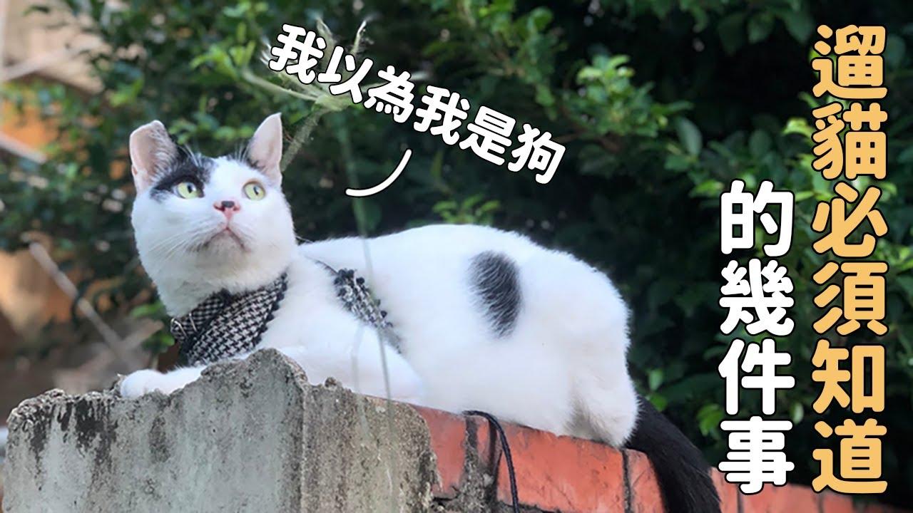 遛狗遛貓大不同?!奇老大告訴你遛貓需知幾件事!|教他不要放棄他