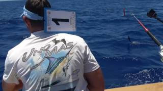 2017 Bermuda Big Game | Team Uno Mas | White Marlin