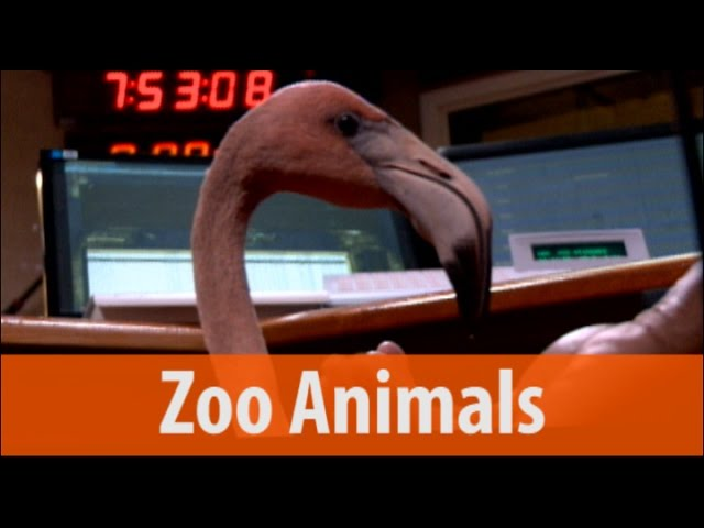 Zoo Animals - Porcupine, Serval and Flamingo - Part 2 of 2