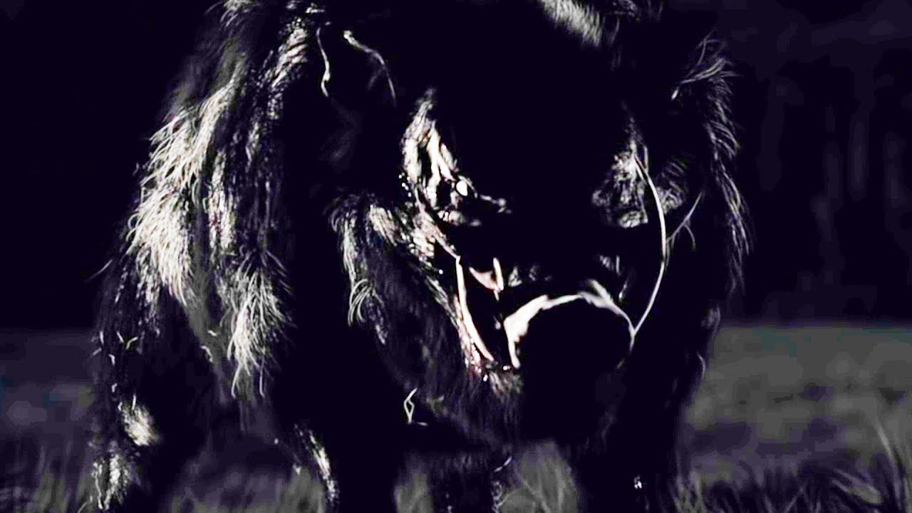 Boar Film