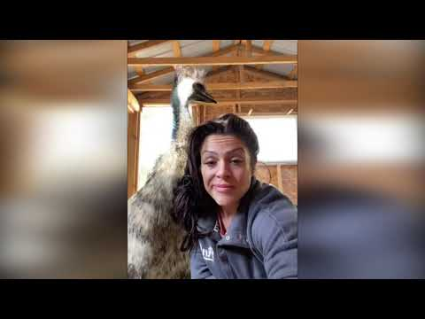 Funny Animals Videos Compilation #5