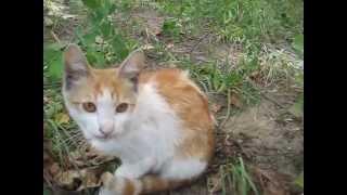 KSN Прыгучий рыжий котенок