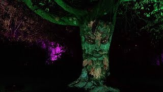 Talking Tree in the grounds of Glasgow Botanic Gardens during GlasGLOW 2018 fantasy light show