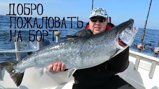 троллинг лосося в балтийском море