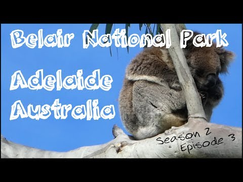 Belair National Park | Adelaide Australia | Travel with Kids