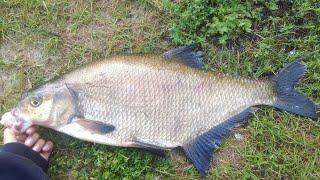 Русская Рыбалка 4 Дневной Лайт 5й отборочный Максималка