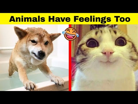 Hilarious Animals Who Simply Can't Hide Their Emotions