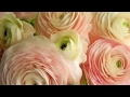 Wedding Flowers by Petals From Paula