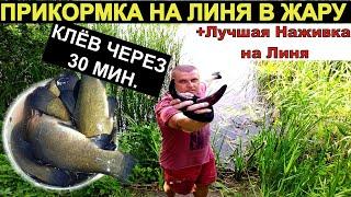 30 МИНУТ И ЛИНЬ НА ТОЧКЕ. Ловля линя. Рыбалка на линя лучшая прикормка и наживка.
