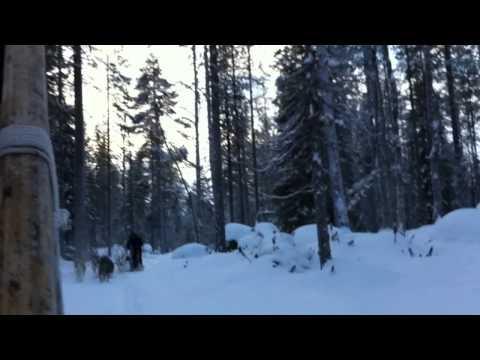 Lapland 2013