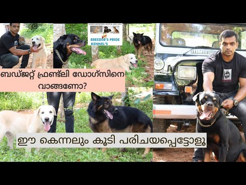 German Shepherd Kennel|Labrador Kennel Kerala|Rottweiler|Dogs Malayalam|long coat german Shepherd