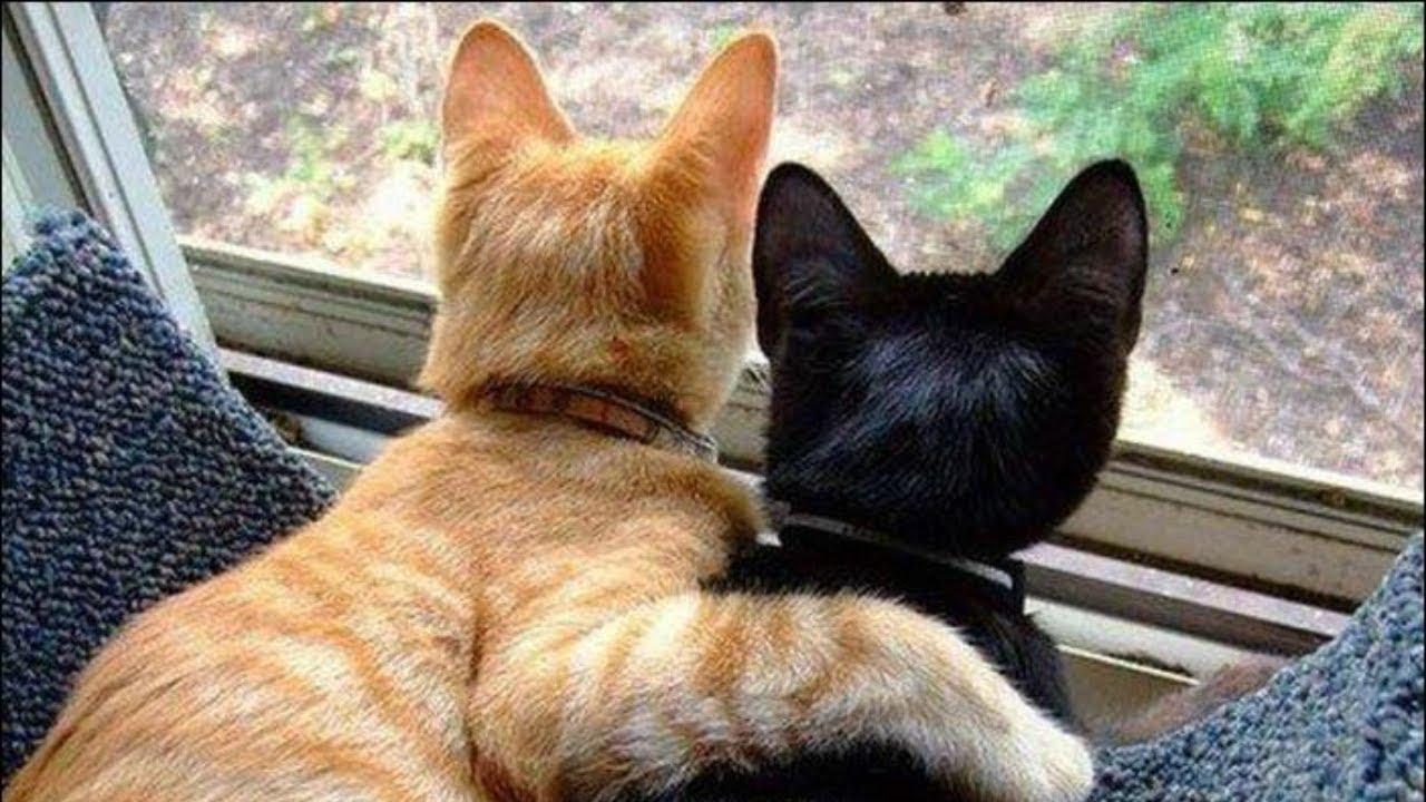 Я РЖАЛ ПОЛЧАСА. Смешные Коты и Собаки. ПРИКОЛЫ С ЖИВОТНЫМИ. 27 | Приложение Автозаработок