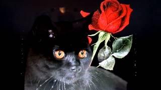 adamo quand les roses