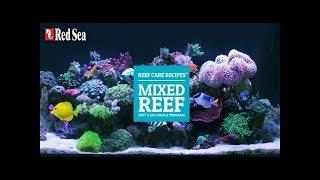 혼합 산호수조 / 리프케어레시피