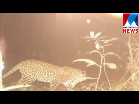 Leopard Attack In Pathanamthitta | Manorama News
