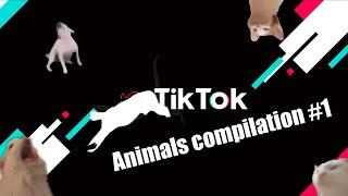 TIKTOK ANIMALS 2021 1 ТИКТОК 2021 ТИКТОК ПОДБОРКА ПРО ЖИВОТНЫХ ТРЕНДЫ ТИКТОК