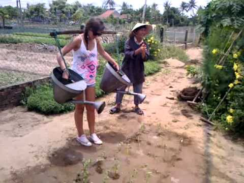 Gardening at Tra Que vegetable village in Hoi An surroundings, Vietnam.