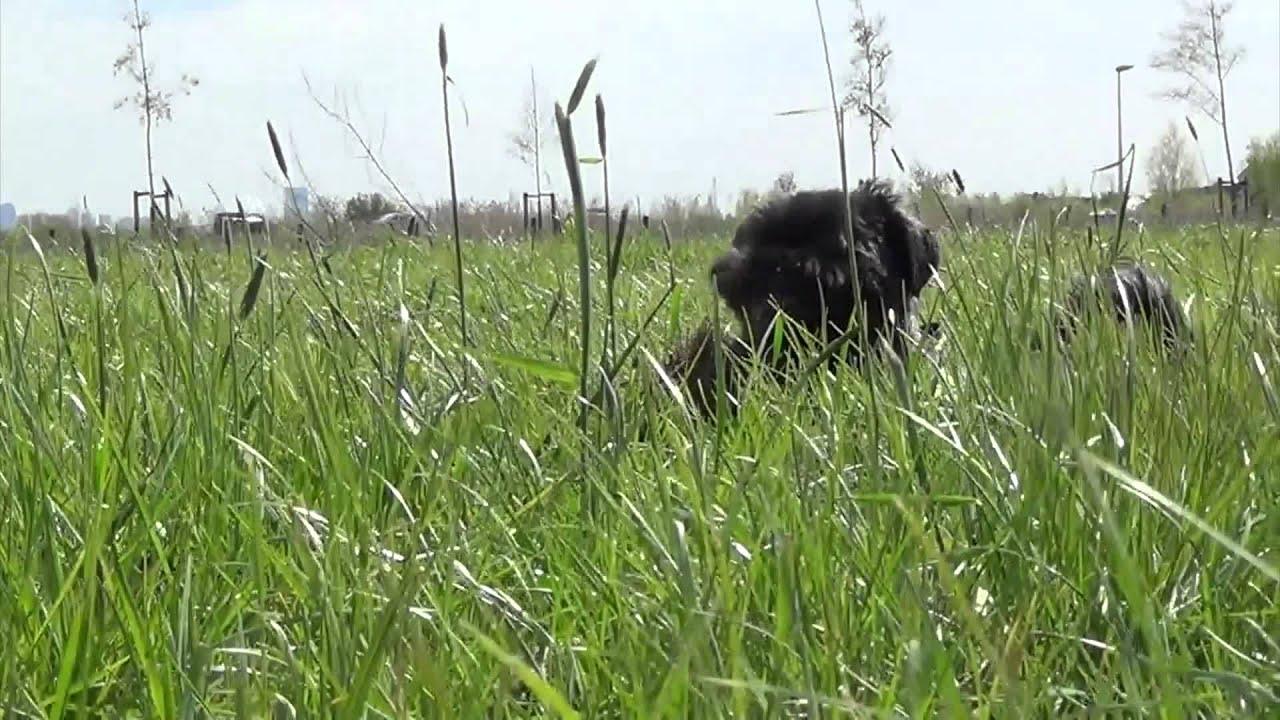 tall green grass field. Tall Green Grass Field R