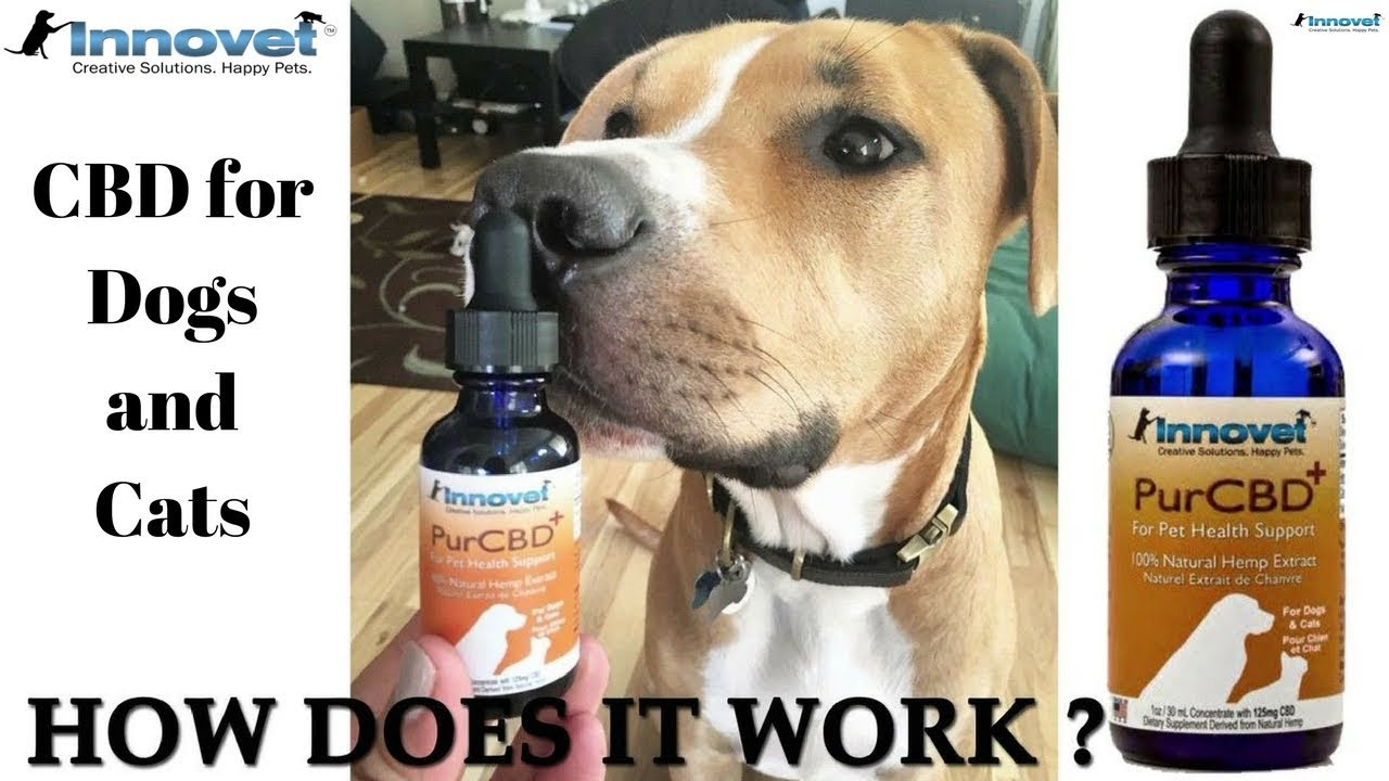 CBD for Dogs and Cats (Innovet Pet products PurCBD+)